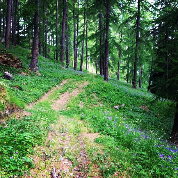 More morning woodland walks.