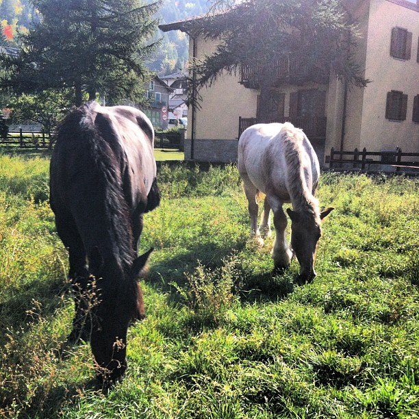 2 new guests at the #cascinagenzianella #oulx  #altavallesusa