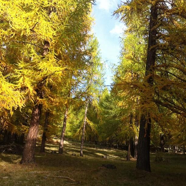 Sunday afternoon walk lovely warm autumn day in #sauzedoulx #skisauze #hotelstellalpina
