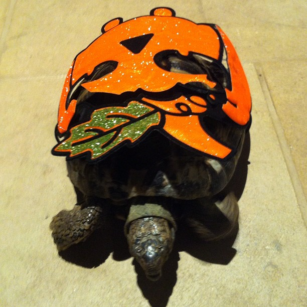 Halloween tortoise, only my sister has one of those !!