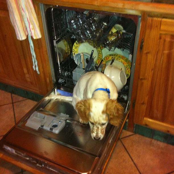 Who needs a kennel when you can sit in the dishwasher!!