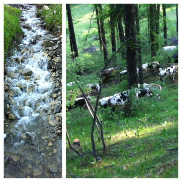 Mountain summer scenery#sauzedoulx #stellalpina