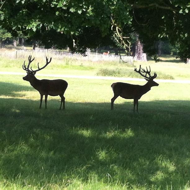 Morning  walk in Ricmond Park