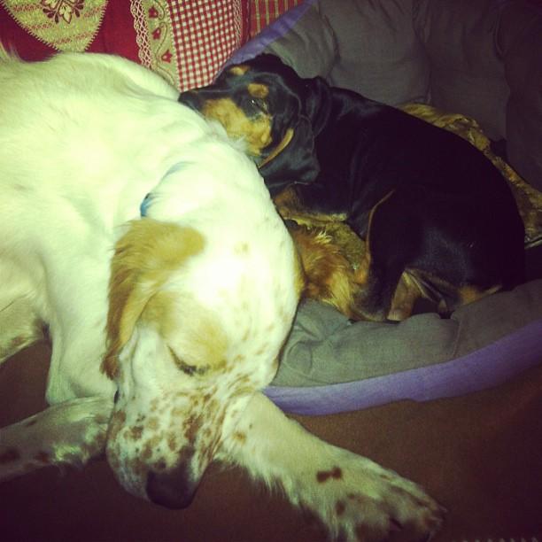My sleepy babies..
