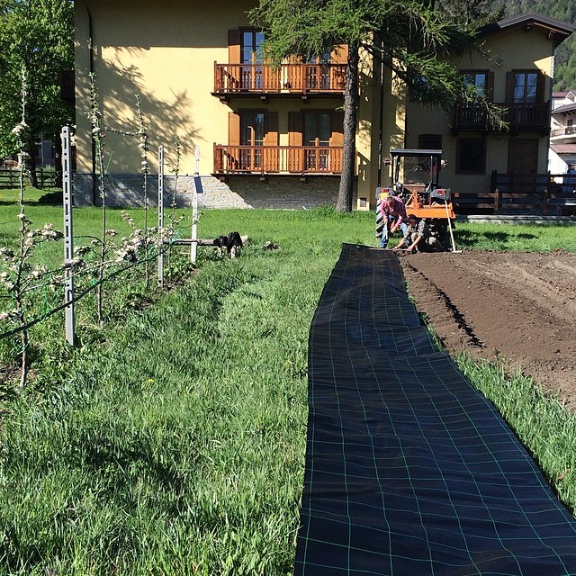 Strawberry planting time the Cascina Genzianella!