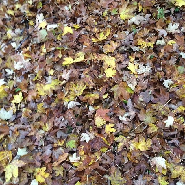 #autumn !!!