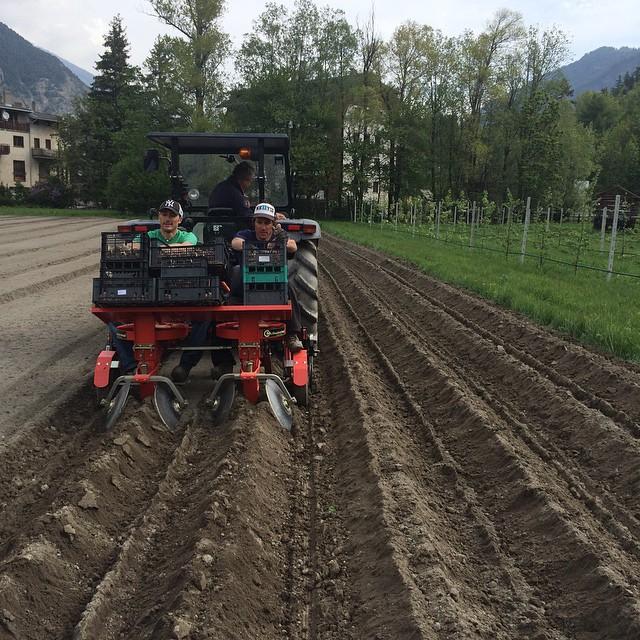 Let the planting begin! Grazie@nikribotto e  il mitico Giuliano the potato man !!#cascinagenzianella #skisauze