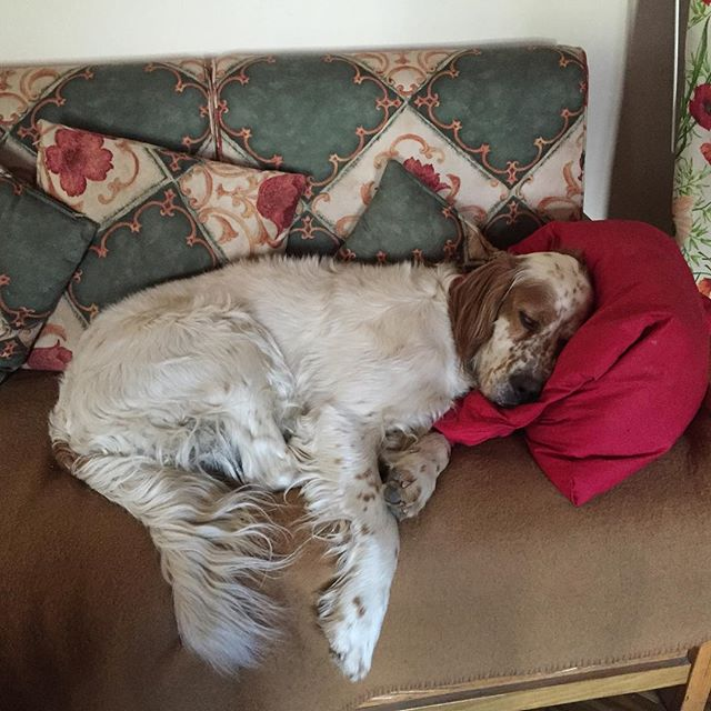 Hope he's comfortable... Or perhaps he needs another cushion???? Its a dogs life!!!