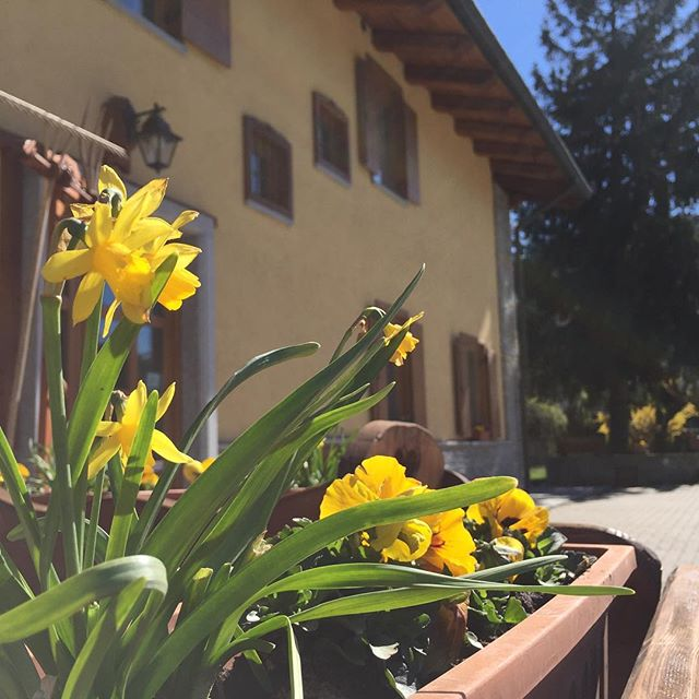 Spring has sprung at the #cascinagenzianella oulx. Great place for a holiday for walkers, bikers or just wanting to relax